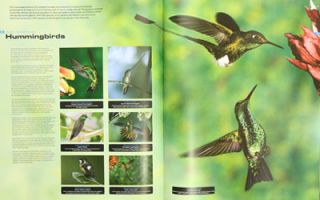 Animals: a visual guide to the animal kingdom.