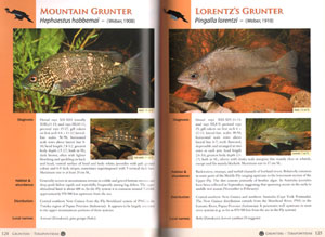 Freshwater fishes of the Fly River Papua New Guinea.