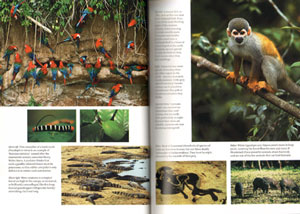 Tree of rivers: the story of the Amazon.