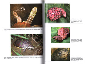 Turtles: the animal answer guide.