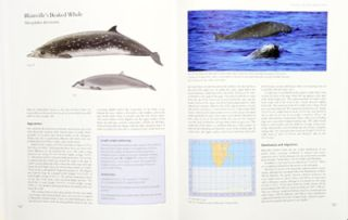 Whales and Dolphins of the Southern African subregion.