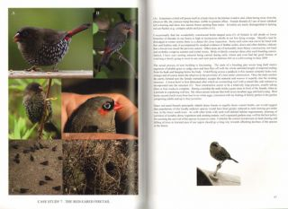 Discovering more about birds: a land-for-wildlifer investigates.