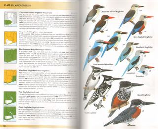 Field guide to the birds of Ghana.