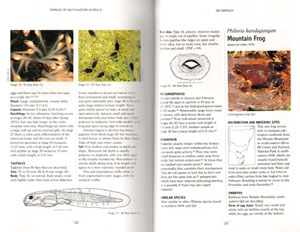 Tadpoles of South-eastern Australia: a guide with keys.