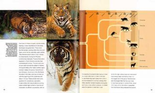 Tiger: lord of the jungle.