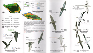 Birds of Samoa and American Samoa: pocket identification guide.