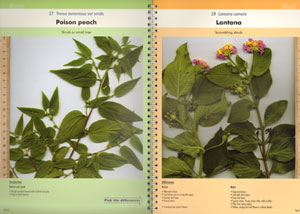 Native plant or weed: pick the difference, volume one.