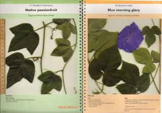 Native plant or weed: pick the difference, volume two.