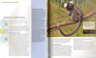 Smartest animals on the planet: extraordinary tales of the natural world's cleverest creatures.