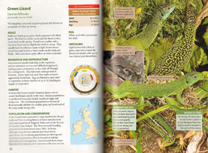 Britain's reptiles and amphibians: a guide to the reptiles and amphibians of Britain, Ireland and the Channel Islands.