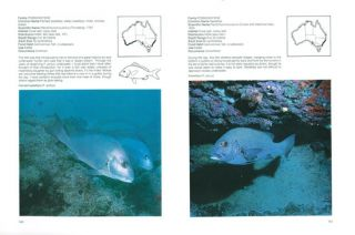 Australian sea fishes south of 30S.