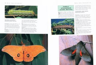 Flying colours: common caterpillars, butterflies and moths of south-eastern Australia.