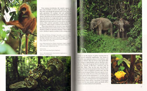 Wild Sabah: the magnificent wildlife and rainforests of Malaysian Borneo.