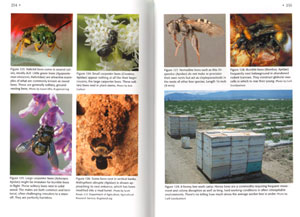 Bees, wasps, and ants: the indispensable role of hymenoptera in gardens.