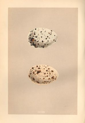 A natural history of the nests and eggs of British birds.