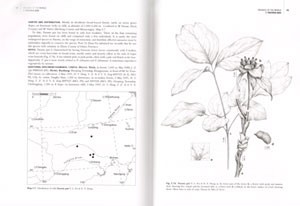 Peonies of the world: taxonomy and phytogeography.