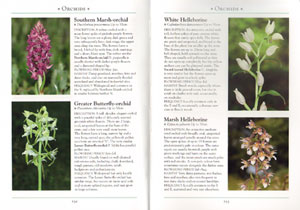 Naturalist's guide to the wild flowers of Britain and Northern Europe.