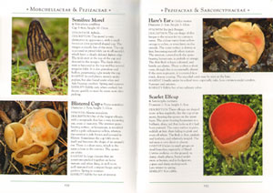 Naturalist's guide to the mushrooms and other fungi of Britain and Northern Europe.
