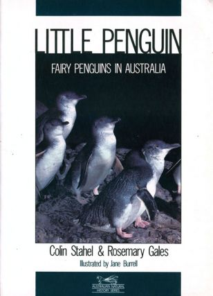 Little Penguin: Fairy penguins in Australia