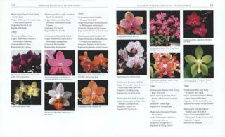 Moth orchids: the complete guide to Phalaenopsis.