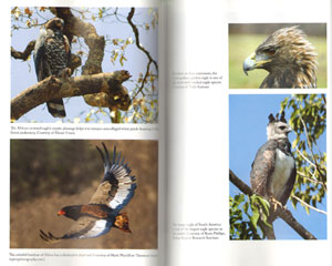 Eagle watchers: observing and conserving raptors around the world.