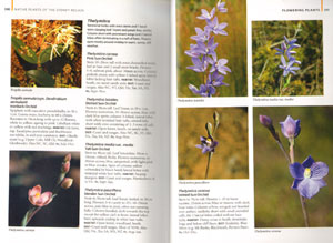 Native plants of the Sydney region: from Newcastle to Nowra and west to the Dividing Range.