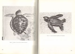 The sea turtles of south-east Africa. I: status, morphology and distributions.