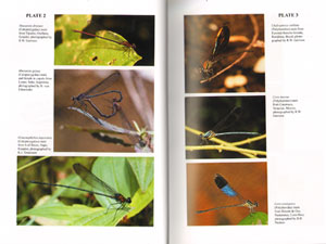 Damselfly genera of the new world: an illustrated and annotated key to the Zygoptera.