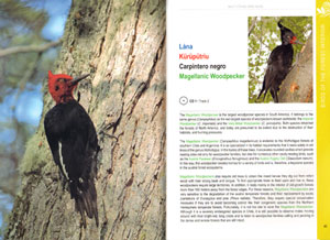 Multi-ethnic Bird guide of the subantarctic forests of South America.