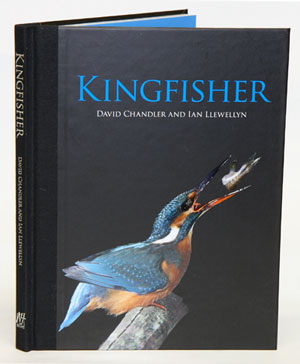 Kingfisher. David Chandler, Ian Llewellyn.