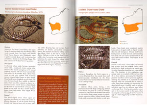 Field guide to reptiles and frogs of the Perth region.