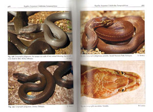 The amphibians and reptiles of Ethiopia and Eritrea.