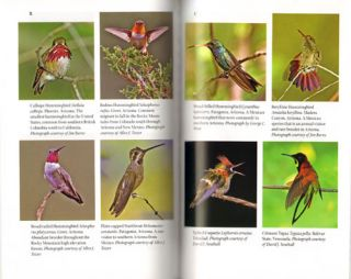 Do Hummingbirds hum?: fascinating answers to questions about Hummingbirds.