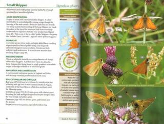 Britain's butterflies: a field guide to the butterflies of Britain and Ireland.