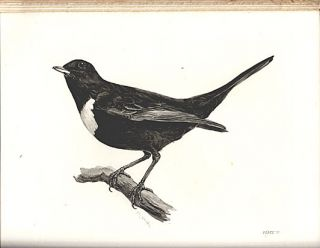 The birds of the British Islands.