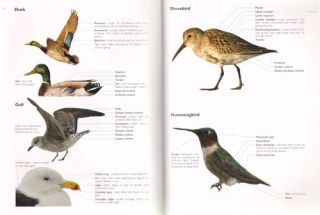 The Crossley ID guide: eastern birds.