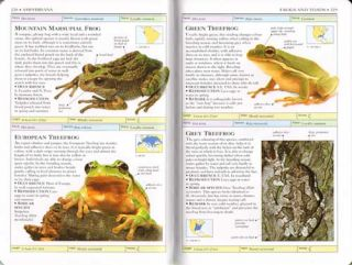 Reptiles and amphibians.