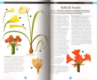 Flowering plants: a concise pictorial guide.