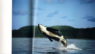 Among giants: a life with whales.