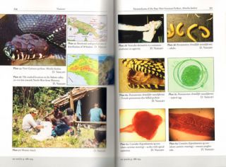Proceedings of the 7th International Symposium on pathology and medicine in reptiles and amphibians Berlin, 2004.