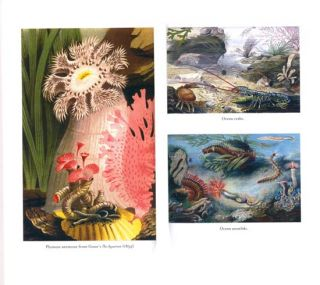 The ocean at home: an illustrated history of the aquarium.