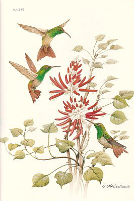 The hummingbirds of North America.