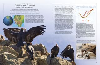 Endangered birds: a survey of planet earth's changing ecosystems