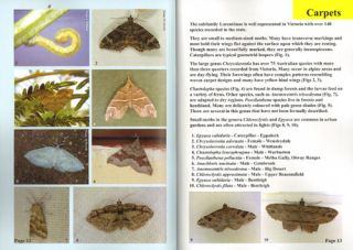 Moths of Victoria: part three, Waves and Carpets and allies Geometroidea (C).