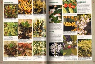 Cultivated plants of the world: trees, shrubs and climbers.