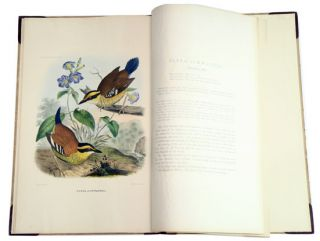 A Monograph of the Pittidae, or Family of Ant Thrushes.