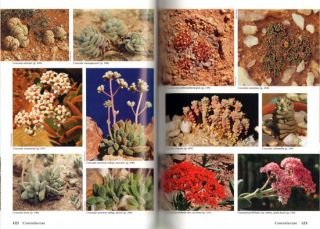 Succulent flora of Southern Africa.