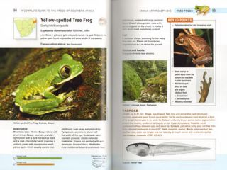 Complete guide to the frogs of Southern Africa.