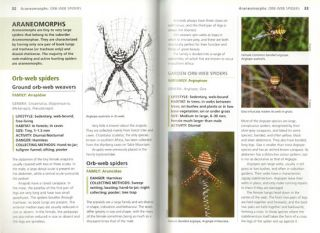 Filmer's spiders: an identification guide to southern Africa.