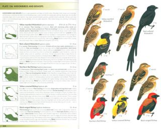 A field guide to the birds of Senegal and the Gambia.